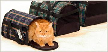 Трансфер для кошки: в гостиницу и обратно